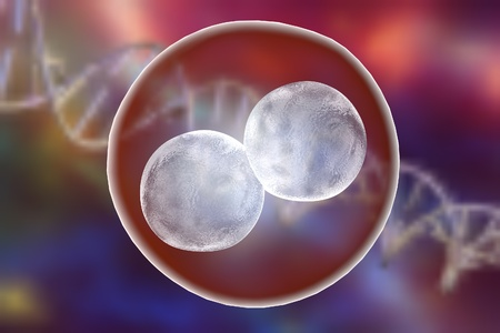 Human embryo on the stage of two cells on background with DNA