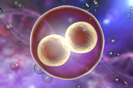 celulas humanas: Embrión humano en el escenario de dos células en el fondo con el ADN Foto de archivo