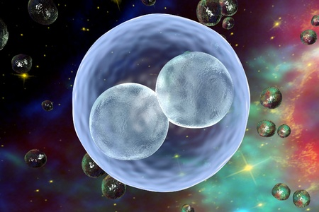 insemination: Human embryo on the stage of two cells on space background with galaxies.