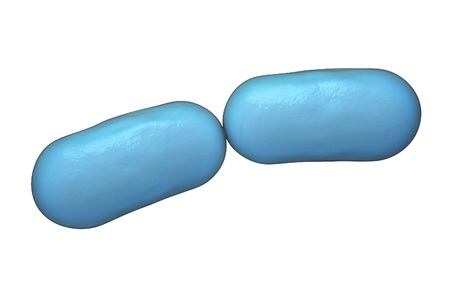 infection: Bacterial infection. Rod-shaped bacteria isolated on white background, 3D illustration Stock Photo
