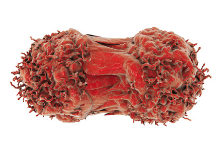 Dividing cancer cells. Multiplication of tumor cells. 3D illustration