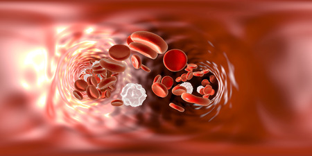 metadata: Full spherical panorama 360 degree view inside blood vessel showing red blood cells and white blood cells. 3D illustration
