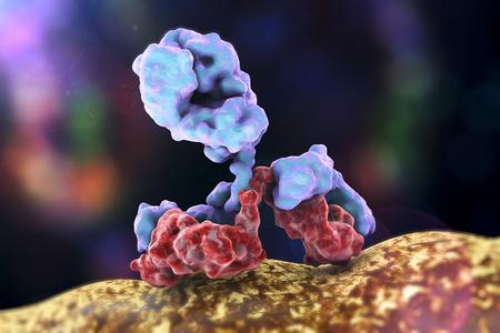Antibody attacking bacterium on colorful background. Immunoglobulin, 3d illustration
