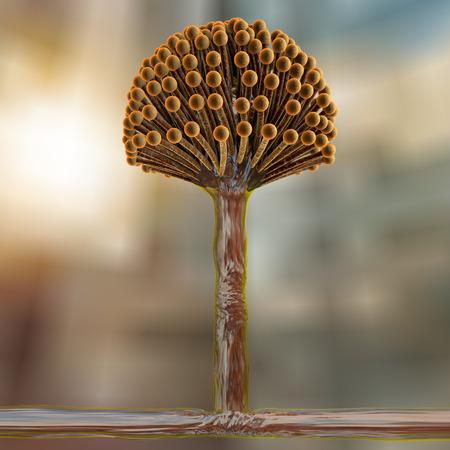 fungi: Fungi Aspergillus, black mold which produce aflatoxins and cause pulmonary infection aspergillosis, 3D illustration