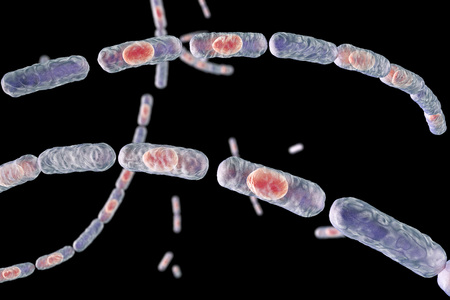 anthrax: Bacillus anthracis, gram-positive spore forming bacteria which cause anthrax and are used as biological weapon, 3D illustration