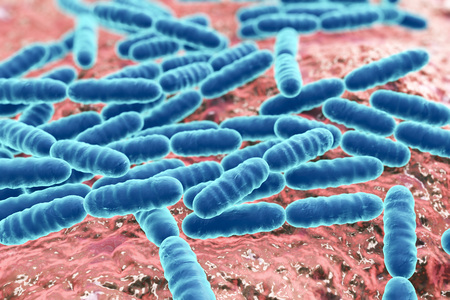 Bacteria Lactobacillus, gram-positive rod-shaped lactic acid bacteria which are part of normal flora of human intestine are used as probiotics and in yoghurt production, 3D illustration Фото со стока