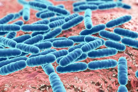 Lactobacillus, Gram-positieve staafvormige melkzuurbacteriën die behoren tot de normale flora van de menselijke darm als probiotica en yoghurt productie, 3D illustration