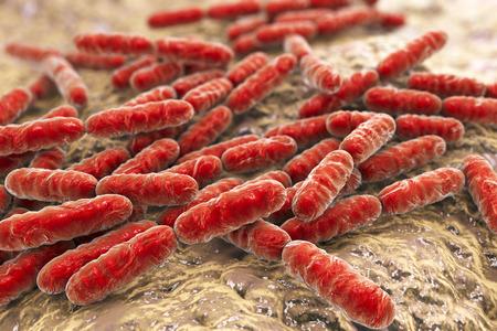intestino: Las bacterias Lactobacillus, en forma de bastoncillos bacterias del ácido láctico gram-positivas que forman parte de la flora normal del intestino humano se utilizan como probióticos y en la producción de yogur, la ilustración 3D