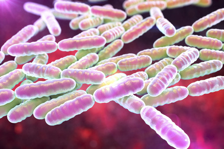 human intestine: Bacteria Lactobacillus, gram-positive rod-shaped lactic acid bacteria which are part of normal flora of human intestine are used as probiotics and in yoghurt production, 3D illustration Stock Photo