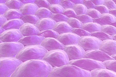 celulas humanas: Capa de células, células de piel humana o células epiteliales. ilustración 3D