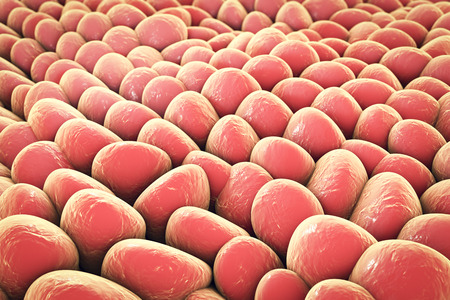 Layer of cells, human skin cells or epithelial cells. 3D illustration Stock Photo