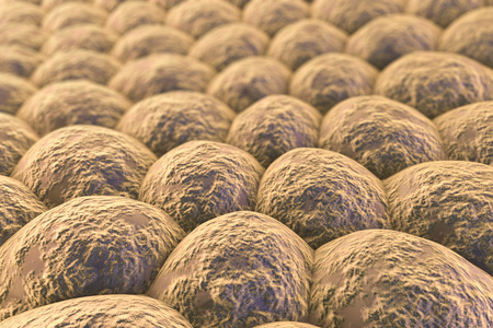 epithelial cells: Layer of cells, human skin cells or epithelial cells. 3D illustration Stock Photo