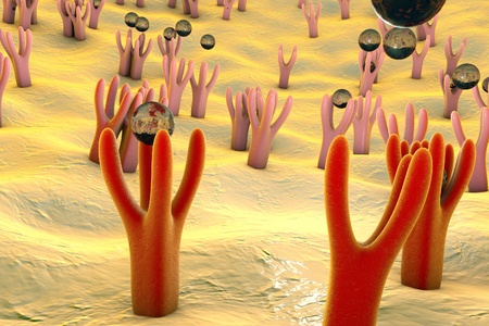 receptors: Membrane of cell surface with receptors and molecules coming to receptors, 3d illustration