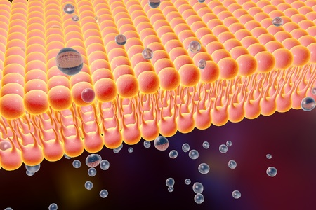 microscopic cellular structure: Cell membrane, lipid bilayer, 3d illustration of a diffusion of liquid molecules through cell membrane