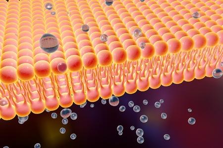 diffusion: Cell membrane, lipid bilayer, 3d illustration of a diffusion of liquid molecules through cell membrane