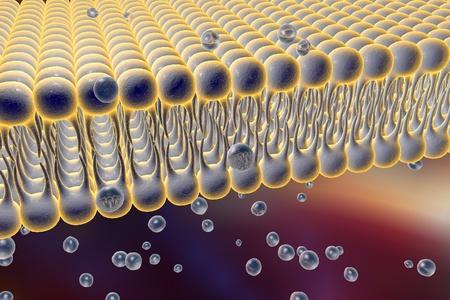 pore: Cell membrane, lipid bilayer, 3d illustration of a diffusion of liquid molecules through cell membrane
