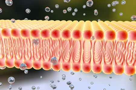 lipid: Cell membrane, lipid bilayer, 3d illustration of a diffusion of liquid molecules through cell membrane