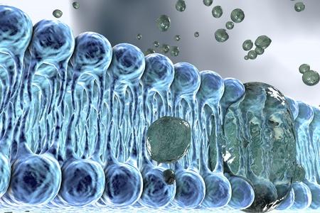 Zellmembran, Lipid-Doppelschicht, 3D-Darstellung einer Diffusion von flüssigen Molekülen durch Zellmembranen