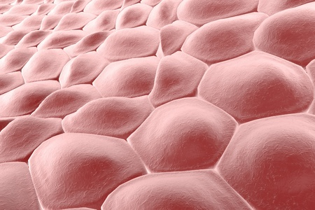epithelial: Layer of cells, human skin cells or epithelial cells. 3D illustration Stock Photo