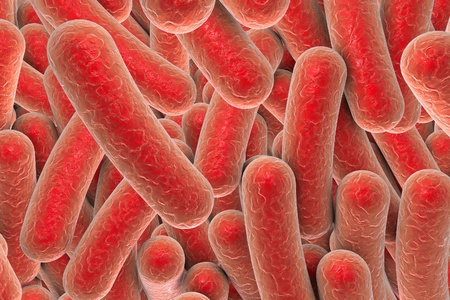 salmonella: Bacterial infection. Rod-shaped bacteria, close-up view. 3D illustration Stock Photo