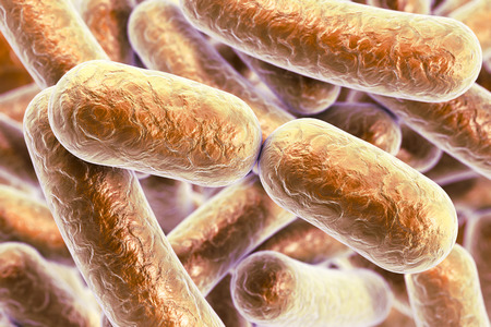 infection: Bacterial infection. Rod-shaped bacteria, close-up view. 3D illustration Stock Photo