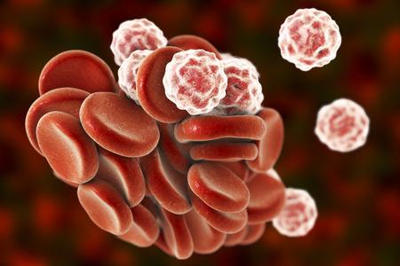 erythrocytes: Blood cells: red blood cells erythrocytes and white blood cells leukocytes . 3D illustration