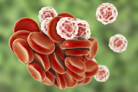 leukocyte: Blood cells: red blood cells erythrocytes and white blood cells leukocytes . 3D illustration