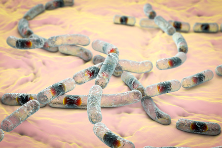 diarrhea: Bacillus cereus, gram-positive spore-producing bacteria arranged in chains which cause food poisoning. 3D illustration