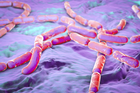 food poisoning: Bacillus cereus, gram-positive spore-producing bacteria arranged in chains which cause food poisoning. 3D illustration