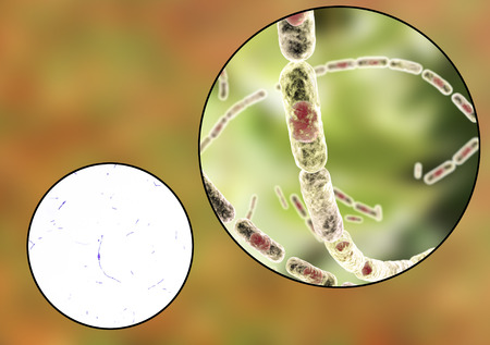 Bacillus anthracis, light micrograph and 3D illustration, gram-positive spore forming bacteria which cause anthrax and are used as biological weapon Stock Photo