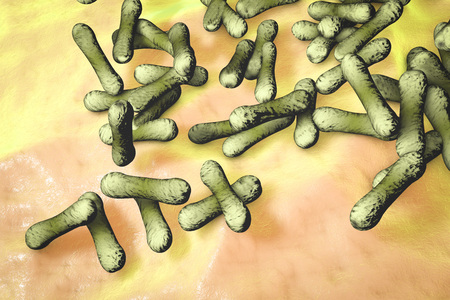 diphtheria: Microscopic illustration of Corynebacterium diphtheriae, Gram-positive rod-shaped bacterium which causes respiratory infection diphtheria. 3D illustration