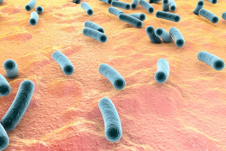 bacteria microscope: Bacteria on surface of skin, mucous membrane or intestine, model of Escherichia coli, Salmonella, Mycobacterium tuberculosis, simulating electron microscope, 3D illustration Stock Photo