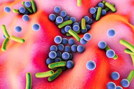 Human pathogenic bacteria, 3D illustration