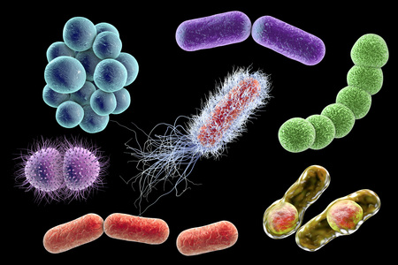 Los microbios aislados sobre fondo negro, ilustración 3D. Las bacterias de diferentes formas. Staphylococci, Streptococci, Neisseria, Clostridium, en forma de barra, Escherichia coli Klebsiella Foto de archivo