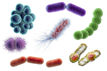 Microbes isolated on white background, 3D illustration. Bacteria of different shapes. Staphylococci, Streptococci, Neisseria, Clostridium, rod-shaped, Escherichia coli Klebsiella Banco de Imagens