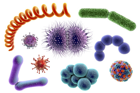 Microbes isolated on white background, 3D illustration. Bacteria of different shapes and viruses. Staphylococci, Streptococci, Neisseria, Treponema, rod-shaped, Escherichia coli, Klebsiella