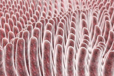 alimentary tract: Villi of small intestine, 3D illustration. Intestinal environment, close-up view