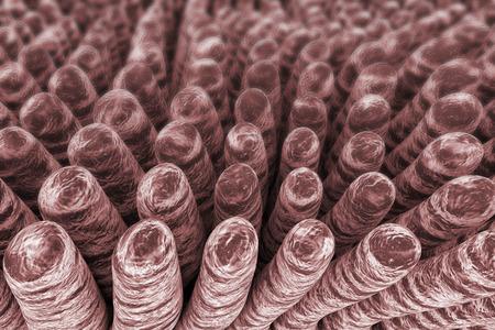 small intestine: Villi of small intestine, 3D illustration. Intestinal environment, close-up view