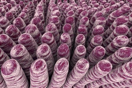 histology: Villi of small intestine, 3D illustration. Intestinal environment, close-up view