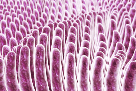 villi: Villi of small intestine, 3D illustration. Intestinal environment, close-up view