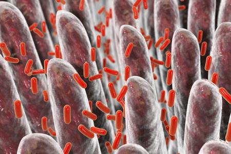 Human intestine with intestinal bacteria, 3D illustration
