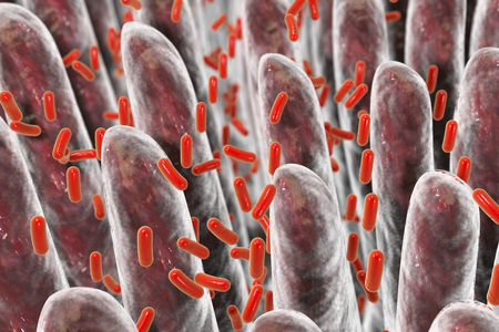 intestin humain avec des bactéries intestinales, illustration 3D
