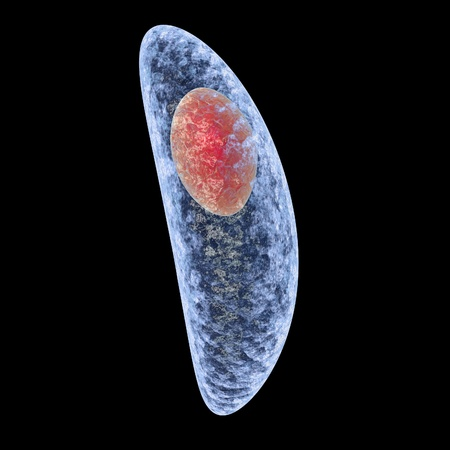 Toxoplasma gondii isolated on black background. Protozoan which is transmitted from cats and other animals and causes toxoplasmosis especially dangerous for pregnant women. 3D illustration