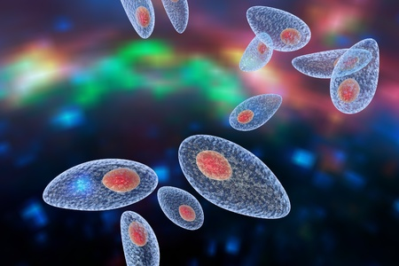 protozoan: Toxoplasma gondii on colorful background. Protozoan which is transmitted from cats and other animals and causes toxoplasmosis especially dangerous for pregnant women. 3D illustration