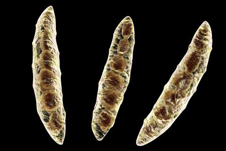 in vitro: Hongos Fusarium que producen micotoxinas en los cultivos de cereales que afectan a los seres humanos y los animales, 3D ilustración que muestra conidios