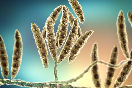 in vitro: Hongos Fusarium que producen micotoxinas en los cultivos de cereales que afectan a los seres humanos y animales, ilustración 3D que muestra conidios e hifas