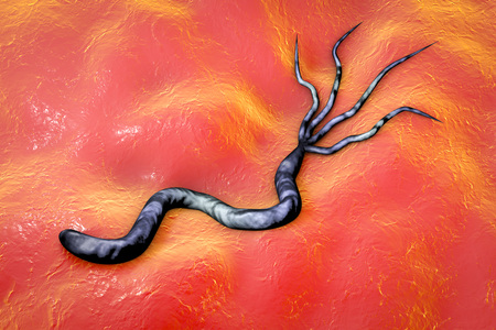 gastroenteritis: 3D illustration of Helicobacter pylori, bacterium which causes gastric and duodenal ulcer Stock Photo