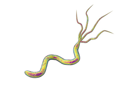 duodenal: 3D illustration of Helicobacter pylori, bacterium which causes gastric and duodenal ulcer isolated on white background