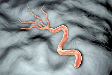 pylori: 3D illustration of Helicobacter pylori, bacterium which causes gastric and duodenal ulcer Stock Photo