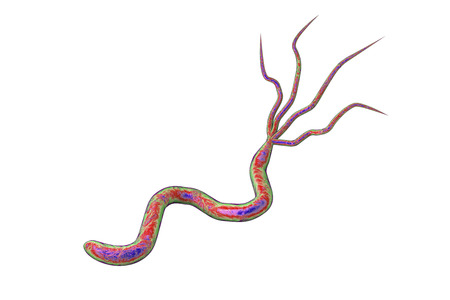 pylori: 3D illustration of Helicobacter pylori, bacterium which causes gastric and duodenal ulcer isolated on white background
